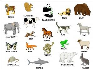 İngilizce Hayvanlar İle İlgili Çalışma Kağıdı